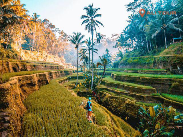 Ruộng bậc thang đậm chất Bali