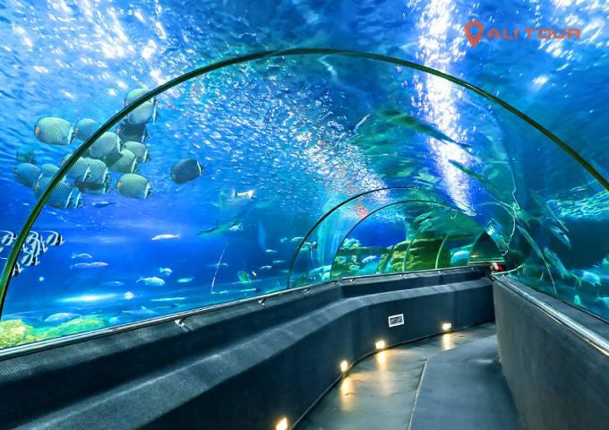 Du khách sẽ phải trầm trồ với thiết kế bên trong khu thủy cung