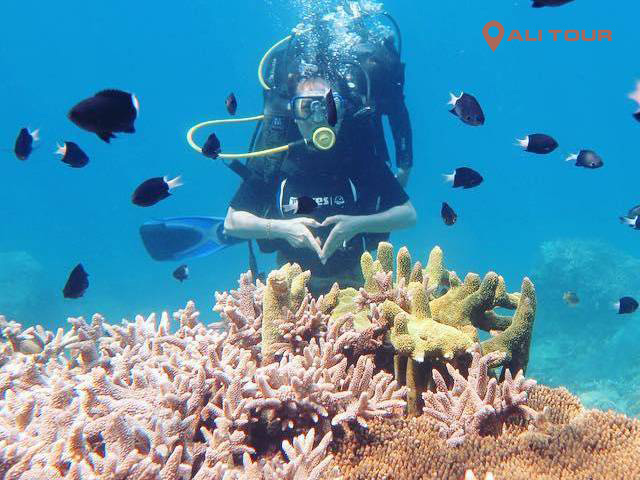 Lặn biển ngắm san hô đem đến cho bạn nhiều trải nghiệm thú vị