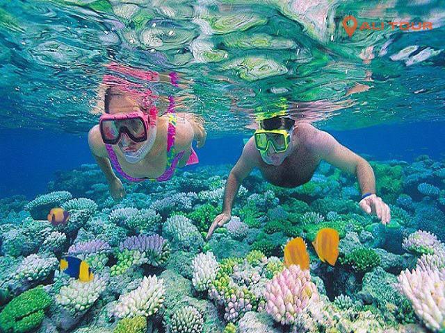 Trải nghiệm dịch vụ lặn biển ngắm các rặng san hô tại quốc đảo Maldives