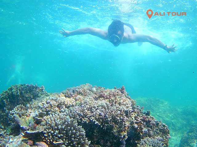 Lặn ngắm san hô ở đảo Phú Quý