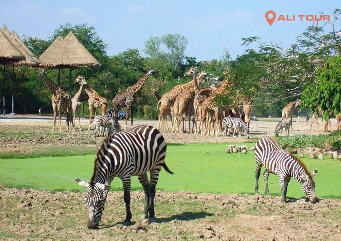 Những loài động vật quý hiếm nhất thế giới được chăm sóc và bảo tồn tại đây